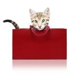 Śliczna figlarka w czerwonym torba na zakupy Fotografia Stock