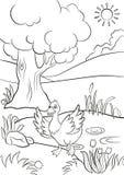 Śliczna kaczka biega od stawu Obraz Royalty Free