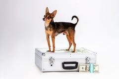 Śliczna malutka psa i srebra walizka Zdjęcia Royalty Free