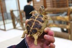Śliczna pluskwa w kontaktowym zoo Fotografia Royalty Free