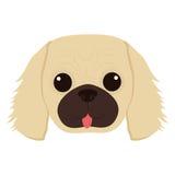 śliczna psia twarz Obrazy Royalty Free