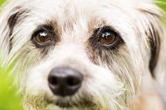 Śliczna Terrier psa twarz Zdjęcia Stock
