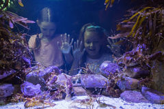 Śliczne dziewczyny patrzeje rybiego zbiornika Obraz Stock