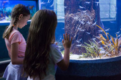 Śliczne dziewczyny patrzeje rybiego zbiornika Fotografia Royalty Free
