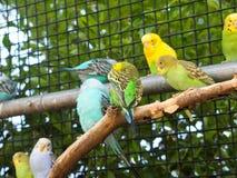 Śliczne papugi w zoo zdjęcia royalty free
