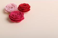 Śliczni menchii i czerwieni kwiaty na kremowym tle Obraz Royalty Free