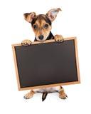 Śliczny chihuahua Crossbreed mienia Chalkboard Fotografia Royalty Free