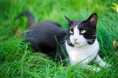 Śliczny czarnego kota lying on the beach na zielonej trawie Obraz Royalty Free