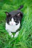 Śliczny czarnego kota lying on the beach na zielonej trawie Zdjęcie Stock
