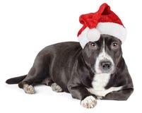 Śliczny czarny pies z Santa kapeluszem Fotografia Stock
