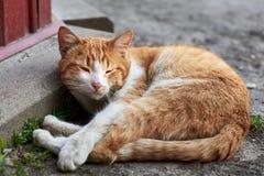 ?liczny czerwie? bezpa?ski kota lying on the beach na ziemi, bezdomny zwierz?cy temat obraz royalty free