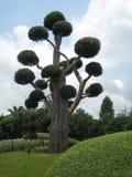 śliczny drzewo Zdjęcie Stock
