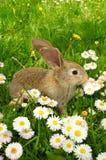 śliczny dziecko królik Zdjęcia Royalty Free