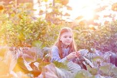 ?liczny dziewczyny obsiadanie w?r?d kapust przy gospodarstwem rolnym fotografia stock
