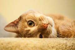 Śliczny Imbirowy kota kołysanie się przy wierzchołkiem schodki Fotografia Stock