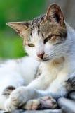 Śliczny Kot Zdjęcia Stock