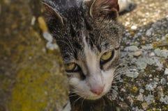 ?liczny kot k?ama puszek na betonie Gnu?ny kot siedzi na betonie Portret kot na ziemi fotografia stock