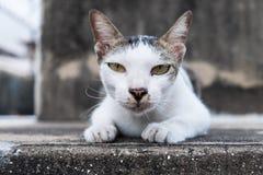 Śliczny kot patrzeje ciebie Obrazy Stock