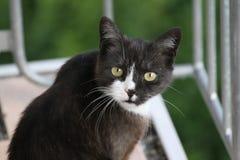 Śliczny kot pyta co ty chce Zdjęcia Royalty Free