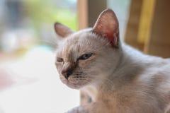 Śliczny kot z relaksuje twarz obrazy stock
