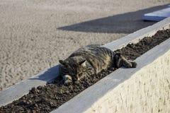 Śliczny kota dosypianie na flowerbed Zdjęcia Stock