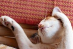 Śliczny kota dosypianie na macie Zdjęcie Stock