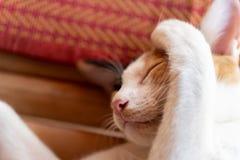 Śliczny kota dosypianie na macie Fotografia Stock
