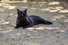 Śliczny kota lying on the beach na ziemi Zdjęcia Royalty Free