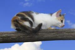 Śliczny kota odprowadzenie Obraz Royalty Free