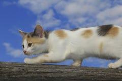 Śliczny kota odprowadzenie Fotografia Stock