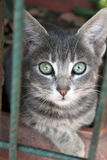 śliczny kota portret Obrazy Royalty Free