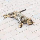 Śliczny kota sen Zdjęcie Royalty Free