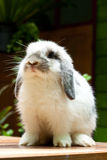 śliczny królik Obraz Stock