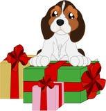 Śliczny kreskówki beagle i prezent Zdjęcie Stock