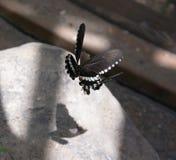 Śliczny motyl w motyla parku w Valencia Obraz Stock