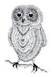Śliczny owlet Obraz Stock