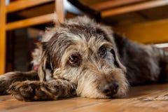 Śliczny pies Zdjęcie Royalty Free