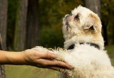 śliczny pies Obraz Royalty Free