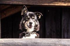 Śliczny pies - Akcyjny wizerunek Zdjęcia Stock