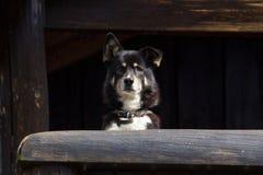 Śliczny pies - Akcyjny wizerunek Zdjęcie Royalty Free