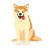 Śliczny pies trakenu Akita inu Obraz Stock