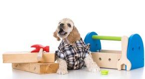 Śliczny pracujący pies Fotografia Royalty Free
