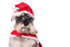 śliczny psi kapeluszowy Santa Fotografia Royalty Free