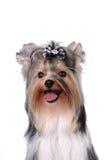 śliczny psi portret fotografia stock