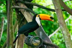 Śliczny ptak Zdjęcia Stock