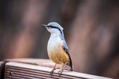 Śliczny ptak na ogrodzeniu fotografia stock