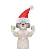 Śliczny Santa psi pokazuje kciuk i powitania up Obraz Royalty Free
