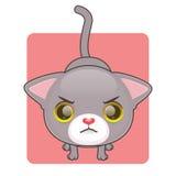 Śliczny szary kot jest gniewny Obraz Stock