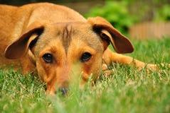 Śliczny szczeniaka psa lying on the beach na trawie Obrazy Stock