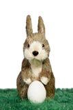 Śliczny Wielkanocny królik Obraz Royalty Free